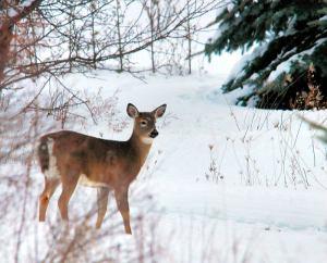 deerwinter